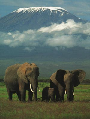 Amboseli National Park.